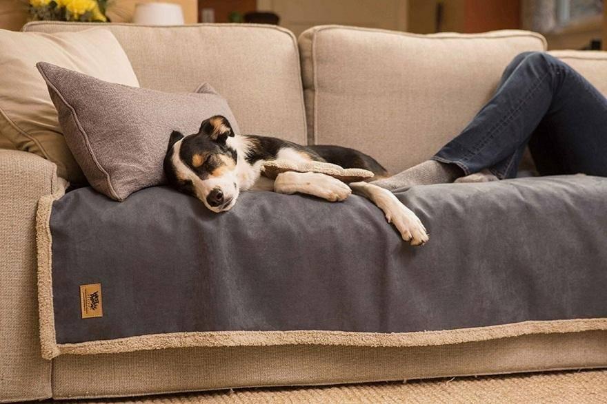 Bật mí những cách bảo vệ ghế sofa khỏi móng vuốt thú cưng