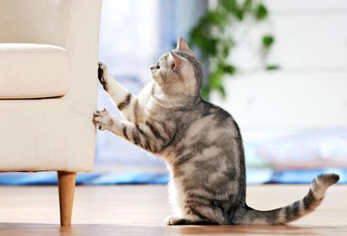 Cách ngăn chó, mèo cào rách, trầy xước ghế sofa