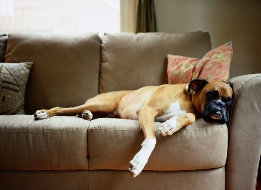Hướng dẫn mua ghế sofa online