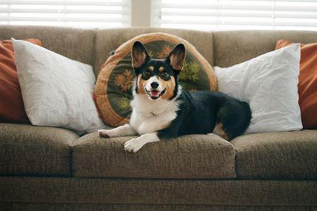 Lựa chọn ghế sofa cho nhà có thú cưng